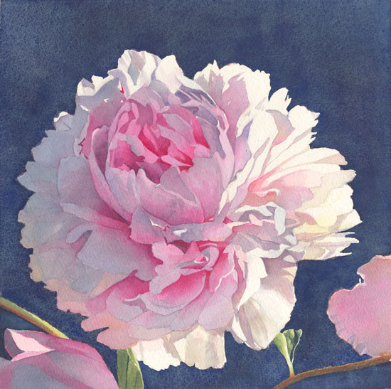 Mikel's Peony