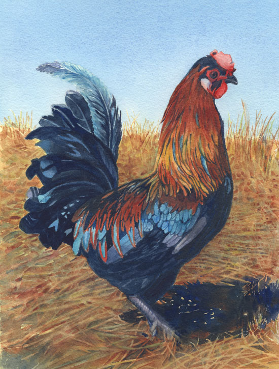 Anja's Rooster