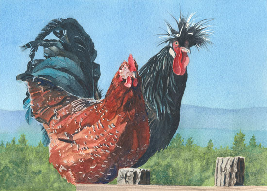 Two Cool Chickens