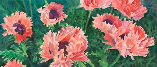 Pick a Pink Poppy