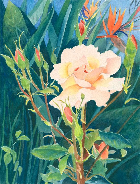 Portuguese Rose
